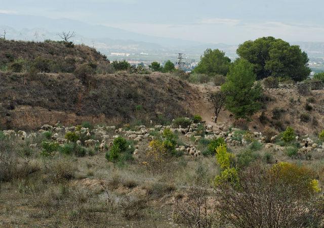 Outlying districts of Alhama de Murcia: Las Cañadas
