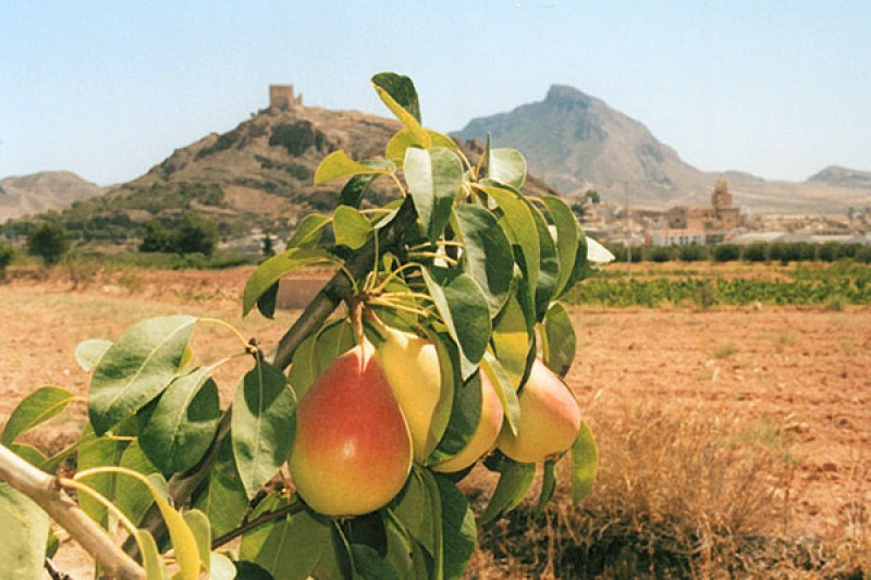 <span style='color:#780948'>ARCHIVED</span> - Pear orchards in Jumilla damaged by dry storms