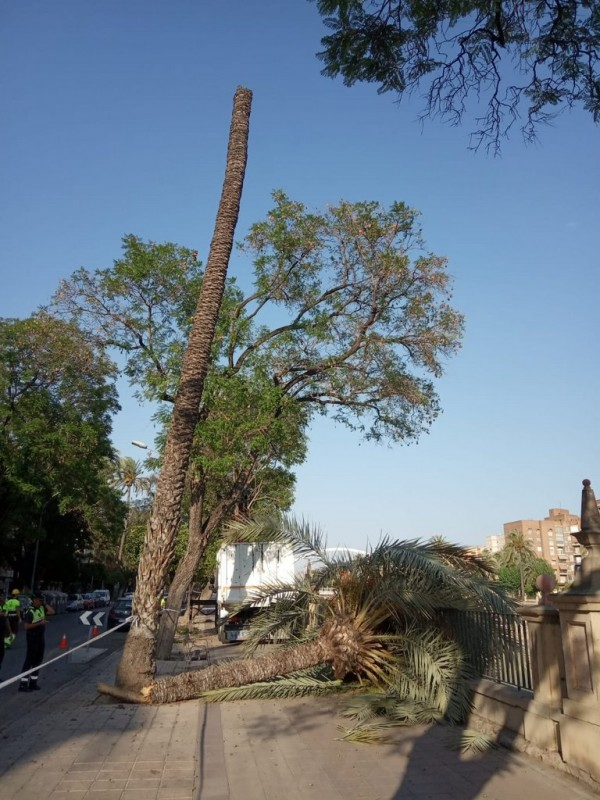 <span style='color:#780948'>ARCHIVED</span> - Mini tornado fells palm tree in Murcia city