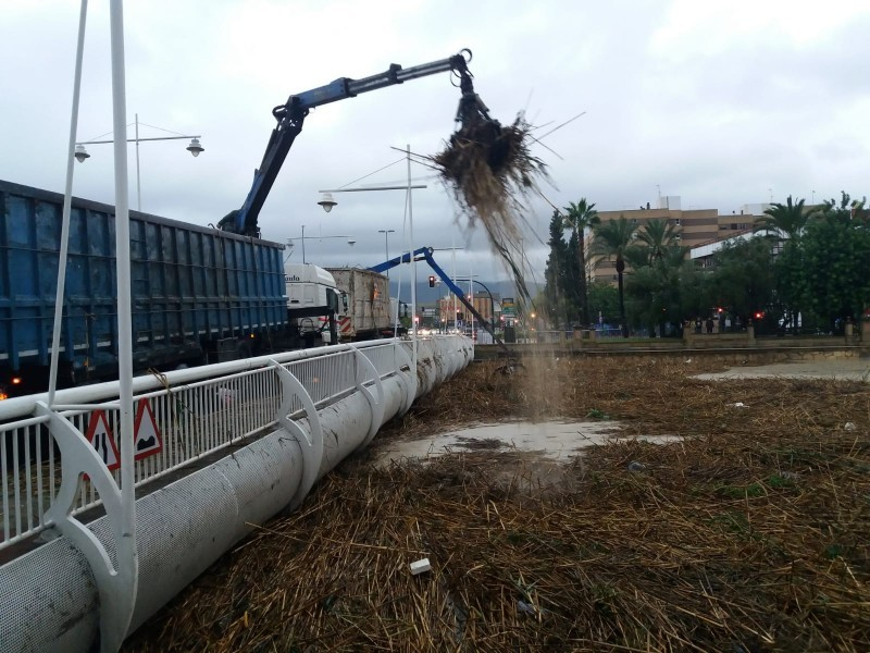 <span style='color:#780948'>ARCHIVED</span> - 200 skip-loads of reeds removed from the Segura will be used as compost in parks