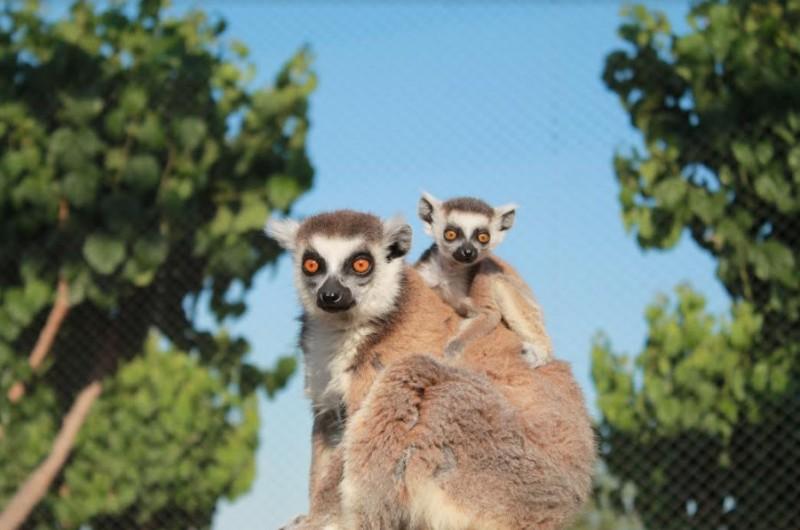 Terra Natura Murcia wildlife and water park