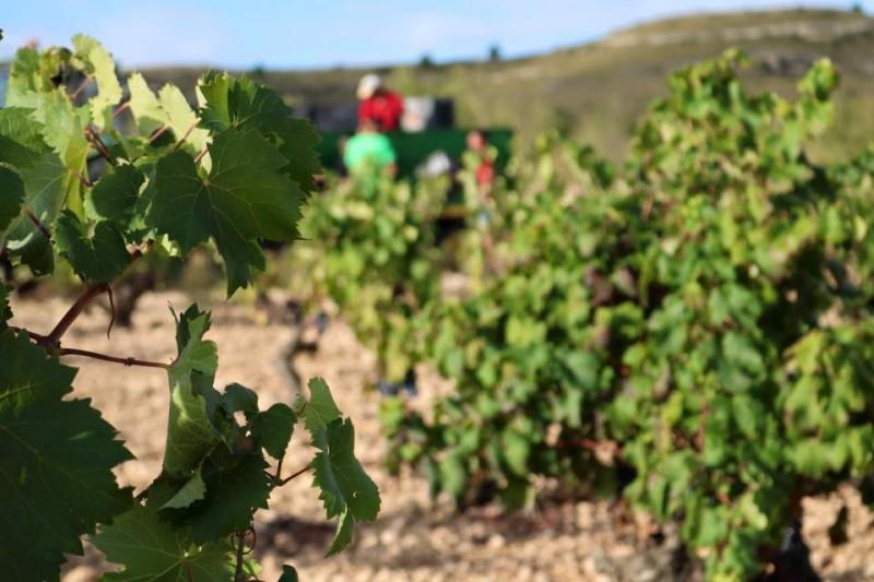 Yecla Wine Route: Bodegas Barahonda