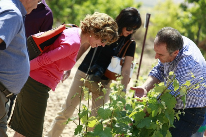 How to book and navigate the Yecla Ruta del Vino